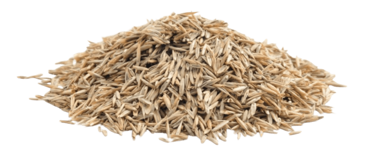 grass-seed.png